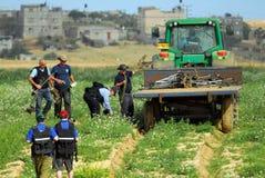 Agricoltura nel deserto di Negev Israele Immagine Stock