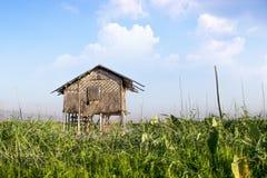 Agricoltura nel lago Inle ed in casa di galleggiamento nel Myanmar Fotografia Stock