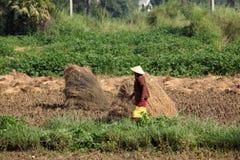 Agricoltura nel Myanmar Fotografie Stock