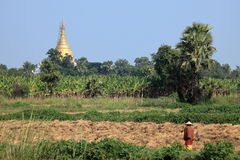 Agricoltura nel Myanmar Fotografia Stock