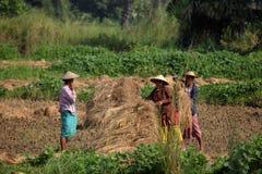 Agricoltura nel Myanmar Immagine Stock Libera da Diritti