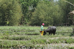 Agricoltura nel Nepal Fotografia Stock