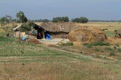 Agricoltura nel Nepal Fotografie Stock Libere da Diritti