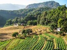 Agricoltura nel parco nazionale di Doi Inthanon Immagini Stock