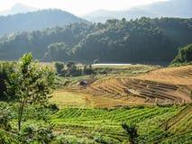 Agricoltura nel parco nazionale di Doi Inthanon Immagine Stock
