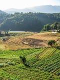 Agricoltura nel parco nazionale di Doi Inthanon Fotografia Stock