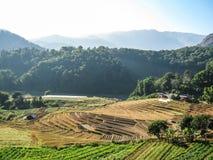 Agricoltura nel parco nazionale di Doi Inthanon Fotografie Stock