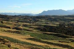 Agricoltura nel Perù Fotografia Stock
