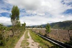 Agricoltura nell'andino Immagini Stock Libere da Diritti