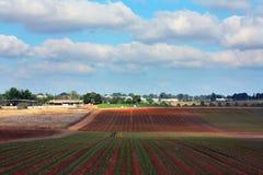 Agricoltura nell'Israele Fotografie Stock
