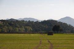 Agricoltura nella campagna Fotografie Stock Libere da Diritti
