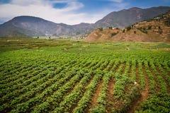 Agricoltura nepalese Fotografie Stock Libere da Diritti