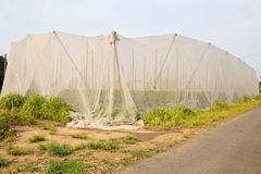 Agricoltura netta della stanza della Taiwan Fotografia Stock Libera da Diritti