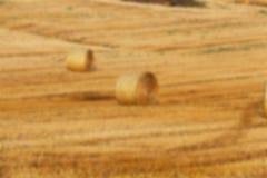 Agricoltura, non a fuoco Immagini Stock Libere da Diritti