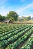 Agricoltura a nord della Tailandia Fotografia Stock Libera da Diritti