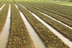 Agricoltura a nord della Tailandia Fotografie Stock Libere da Diritti