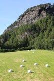 Agricoltura in Norvegia Fotografia Stock Libera da Diritti