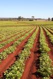 Agricoltura oggi Fotografie Stock