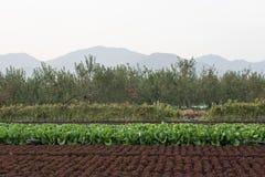 Agricoltura organica Immagini Stock