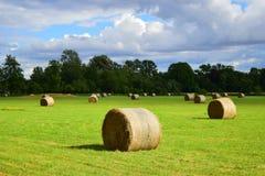 Agricoltura a Oxford Fotografia Stock