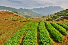 agricoltura PA del Sa vietnam Immagini Stock Libere da Diritti