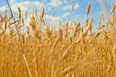 Agricoltura piacevole Immagine Stock Libera da Diritti