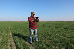 Agricoltura, pianta d'esame del grano dell'agricoltore nel campo Immagini Stock Libere da Diritti