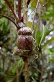 Agricoltura - piante di propagazione da margotta Fotografia Stock