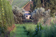 Agricoltura pittoresca Fotografia Stock