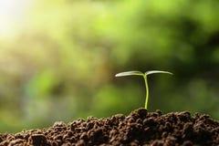 agricoltura plantula che cresce sui suoli fotografia stock