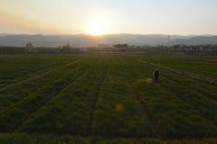 Agricoltura in porcellana Fotografia Stock