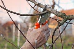 Agricoltura, potante nel frutteto Fotografia Stock