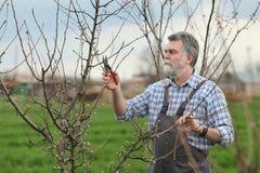Agricoltura, potante nel frutteto Immagine Stock Libera da Diritti
