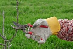 Agricoltura, potante nel frutteto Immagini Stock