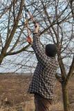 Agricoltura, potante nel frutteto, funzionamento adulto dell'uomo Fotografia Stock Libera da Diritti