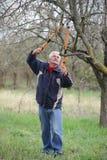 Agricoltura, potante nel frutteto, funzionamento dell'uomo senior Fotografie Stock Libere da Diritti