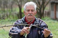 Agricoltura, potante nel frutteto, funzionamento dell'uomo senior Immagini Stock