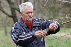 Agricoltura, potante nel frutteto, funzionamento dell'uomo senior Fotografia Stock Libera da Diritti