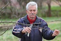 Agricoltura, potante nel frutteto, funzionamento dell'uomo senior Immagine Stock Libera da Diritti