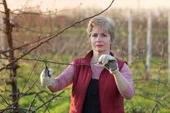 Agricoltura, potante nel frutteto, funzionamento della donna adulta Immagini Stock
