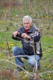 Agricoltura, potante nella vigna, funzionamento dell'uomo senior Fotografia Stock