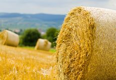 Agricoltura produttiva Fotografia Stock