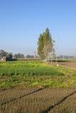 Agricoltura punjabi Fotografie Stock Libere da Diritti