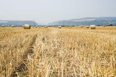 Agricoltura raccolta del campo con le balle della paglia durante l'estate Germania vicino a Andernach Immagini Stock