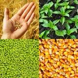 Agricoltura, raccolta di concetto immagine stock libera da diritti