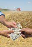 Agricoltura, raccolto del grano Fotografia Stock
