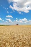 Agricoltura, raccolto del grano Immagine Stock Libera da Diritti