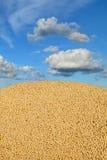 Agricoltura, raccolto della soia Fotografie Stock Libere da Diritti