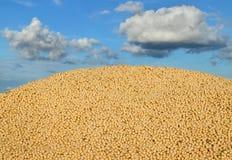 Agricoltura, raccolto della soia Immagine Stock