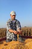 Agricoltura, raccolto di cereale, agricoltore ed il raccolto Fotografie Stock